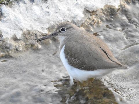 1801bird01