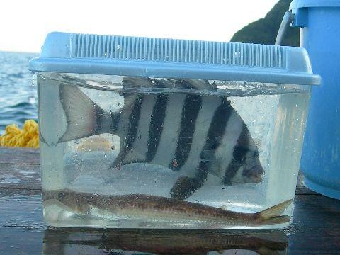 1709fishing01