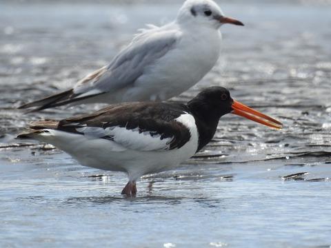 1804bird01
