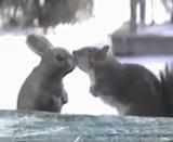 キス、抱擁、種を越えて愛し合う動物たち