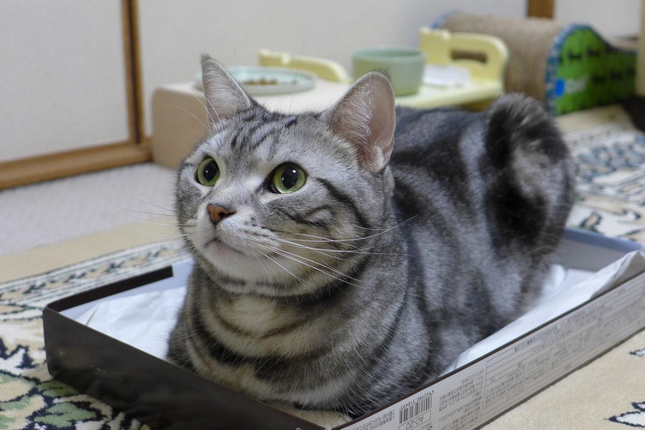 猫 見上げる 画像
