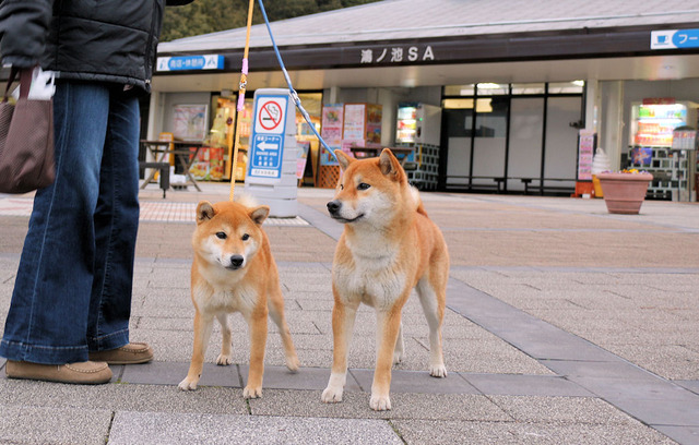 岡山遠征のお供