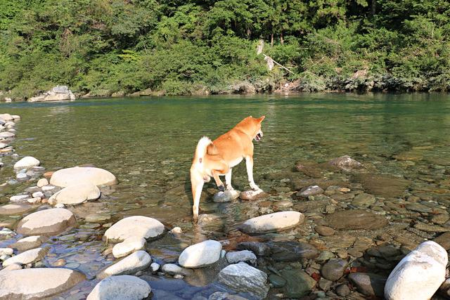 フラミンゴ犬現る