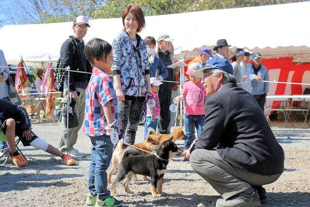 幼稚犬審査風景
