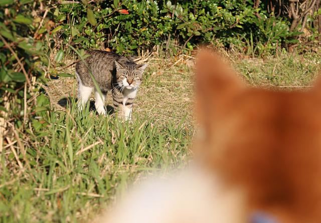 虎徹VS猫