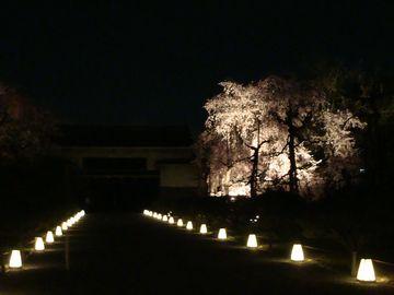 二条城ライトアップ3