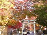 鷺の森神社3