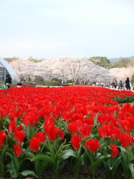 京都府立植物園エントランス