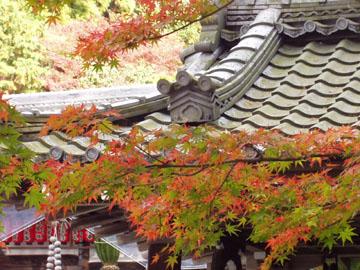 赤山禅院の紅葉と屋根瓦