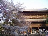 南禅寺三門と桜