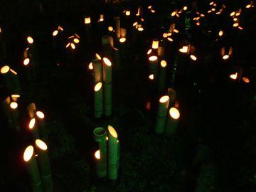円山公園吉水の小川青竹灯り