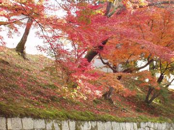 曼殊院門跡散り紅葉