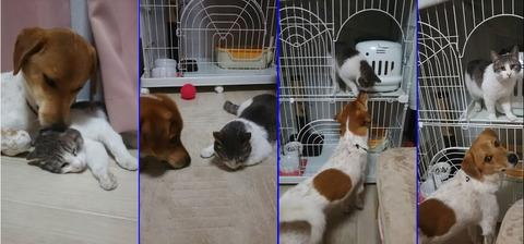 犬が救った猫