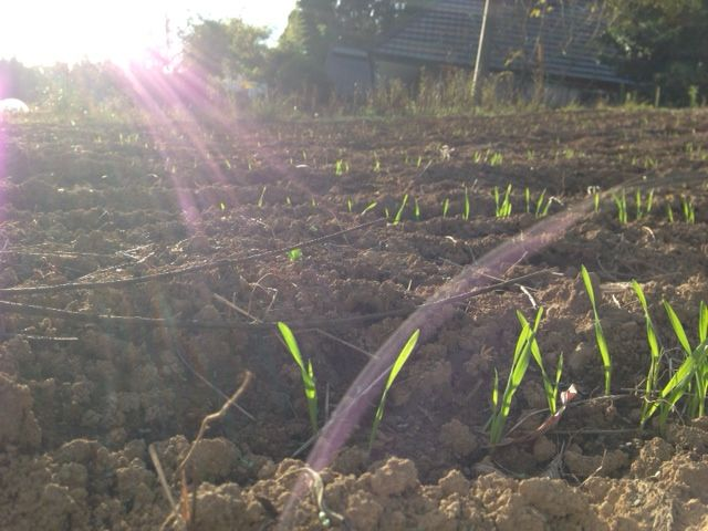 【岡山移住生活 149日目】 農について...環境を整えさえすると、自然と芽が出る。