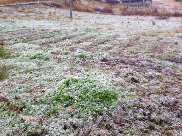 【岡山移住生活 166日目】 自然農と霜、自然の摂理について