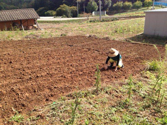【岡山移住生活 133日目】自然農では、水をやらず、自然に全てを委ねます。
