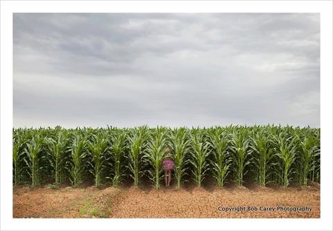 corn_the-tutu-project