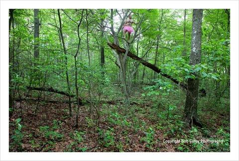 Fallen-Tree-Bob-Carey-Photography
