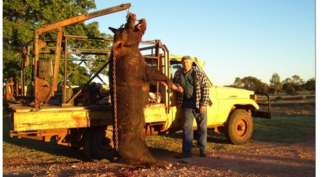 giant-feral-pig