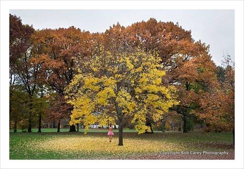autumn-tree_the-tutu-project