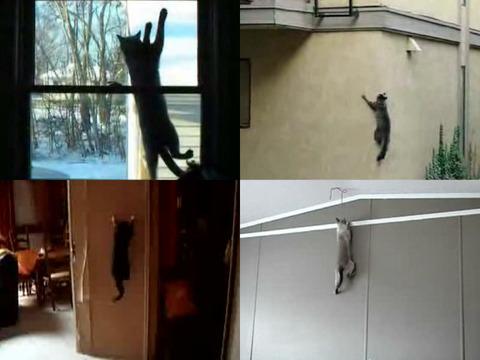 climb_cat