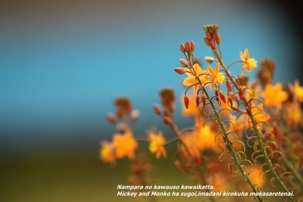 nampara_MIMO_20111104-IMG_7960