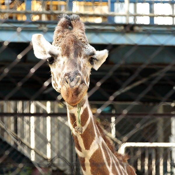 IkedaZoo20120818-_MG_8632