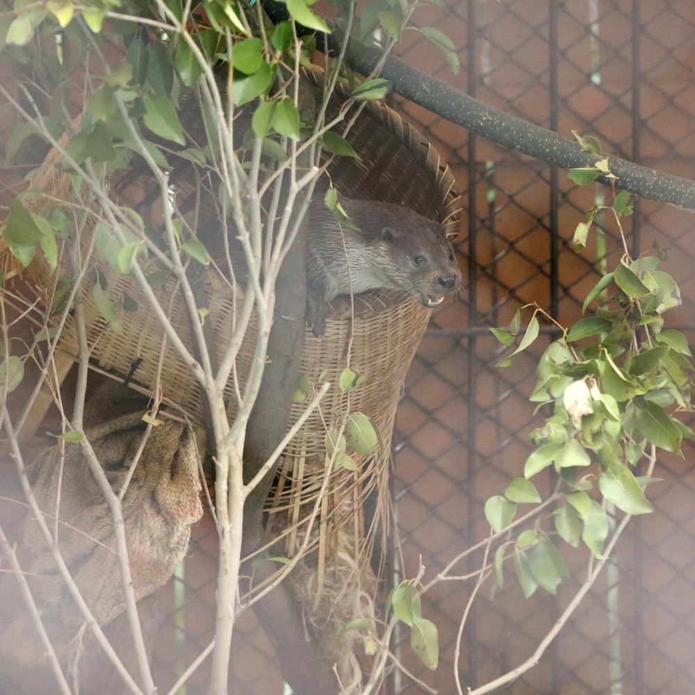 20140330_上野動物園_うめ&もも&さくら_H1DX1939
