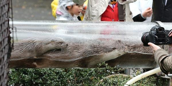 20140330_上野動物園_ウメ&モモ&サクラ_H1DX1839