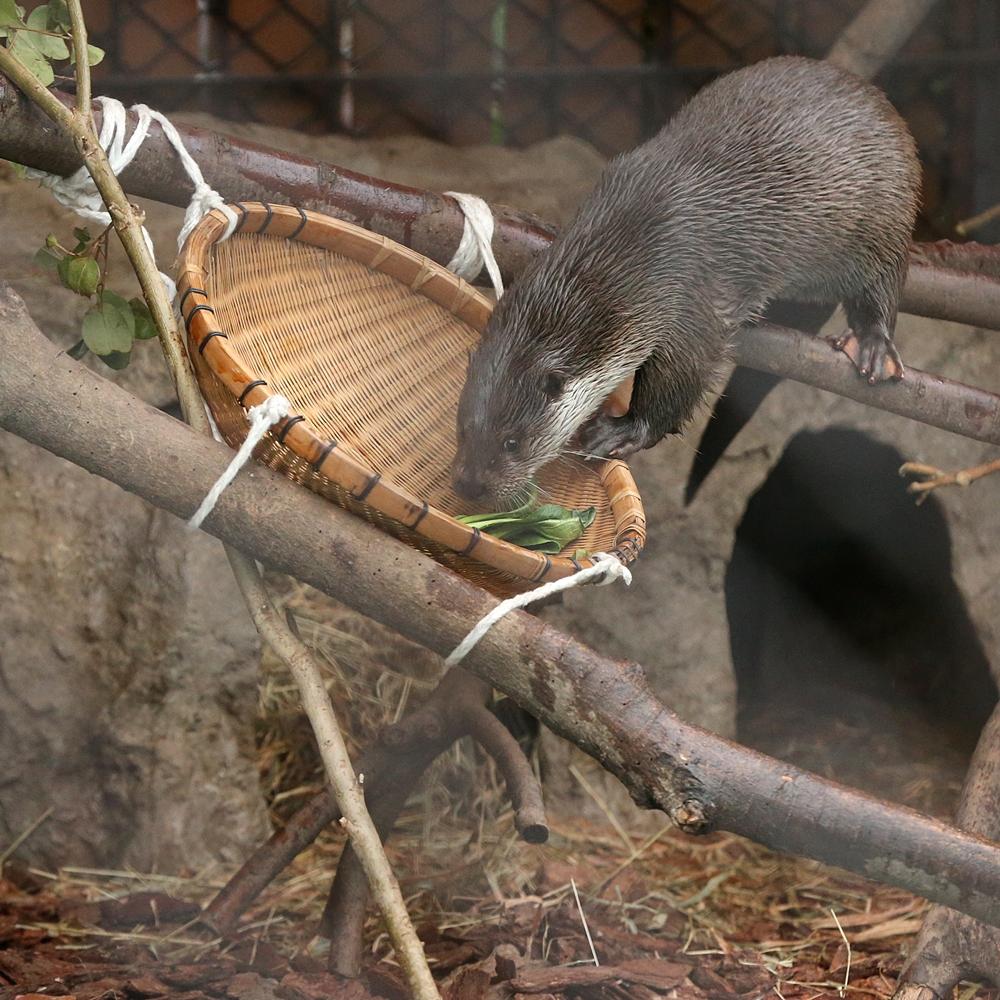 20140330_上野動物園_ウメ&モモ&サクラ_H1DX1942