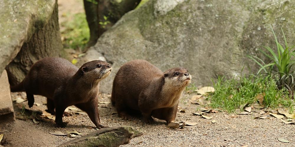 20140426_のいち動物公園_メコン_メナム_H1DX0823
