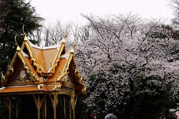 20140330_上野動物園_R5D_2031