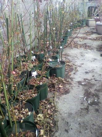 P1005445切花種コーナー