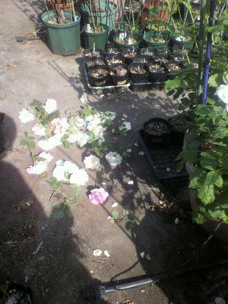 P1009213花柄切り11日