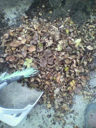 P1007539枯れ葉掃除