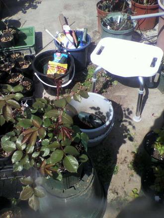 P1005674鉢植え手入れスタイル