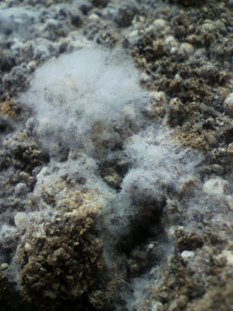 P1001583発酵肥料菌糸
