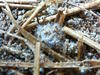 発酵サプリ〜菌糸が