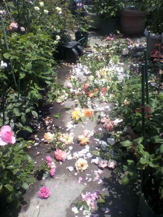 P1008477花柄切り