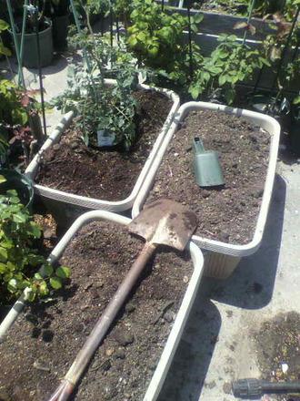 P1009364野菜を植え付ける