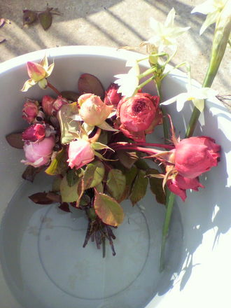 最後の冬バラ