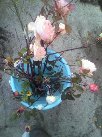 P1007654花枝採取