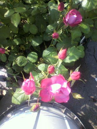 P1008646和花