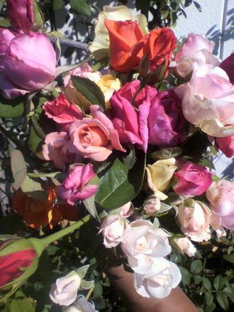 P1003597花摘み