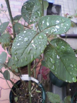 朝から雨模様