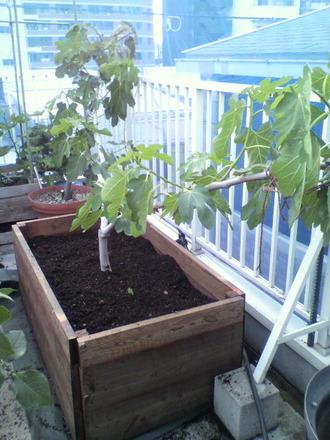 P1002399木枠ベッドに植え込み」