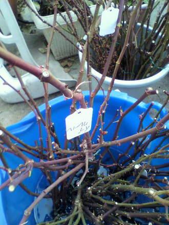 切花種の剪定枝