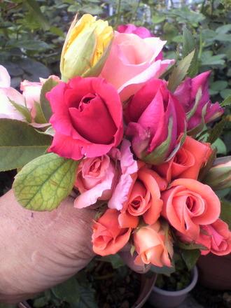 P1003201花摘み1