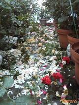 花殻摘み�
