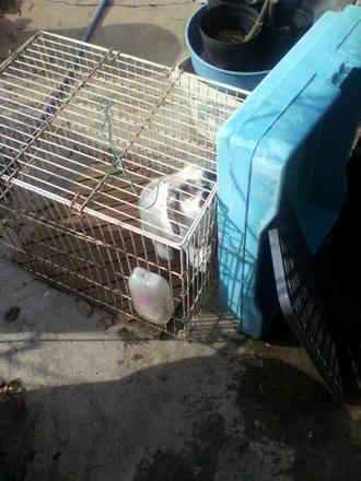ウサギの世話